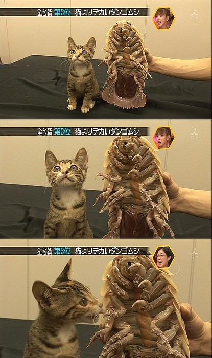 the-kitten-and-the-giant-bug-1457-1232142181-13